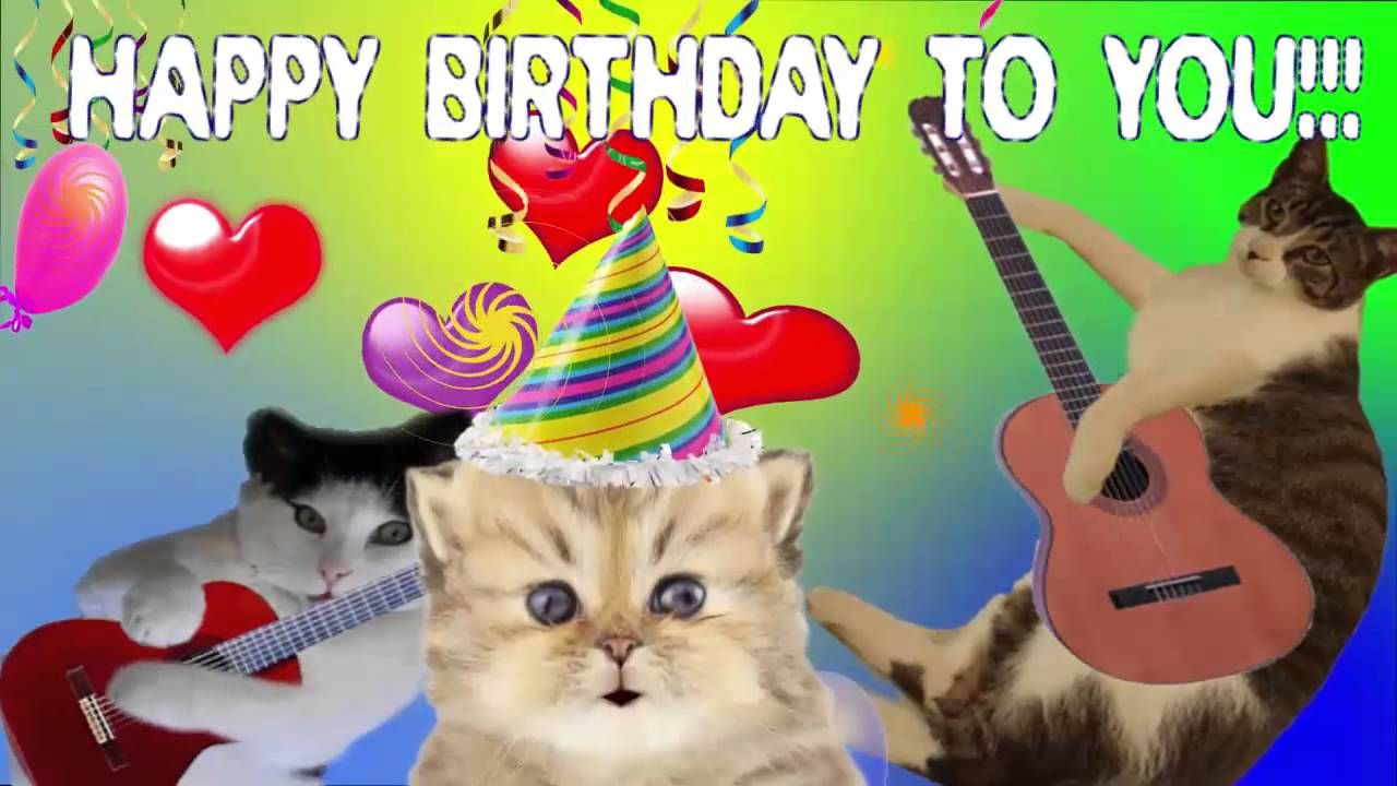 happy birthday pictures with cats Google Search Happy