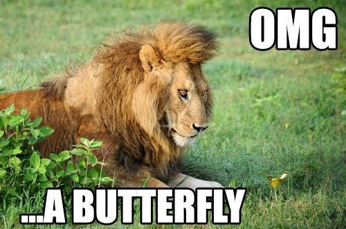 Really Funny Animal Jokes