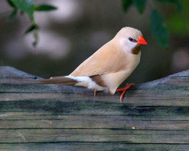This Finch Don T Flinch Bird Pictures Beautiful Birds Bird Lovers