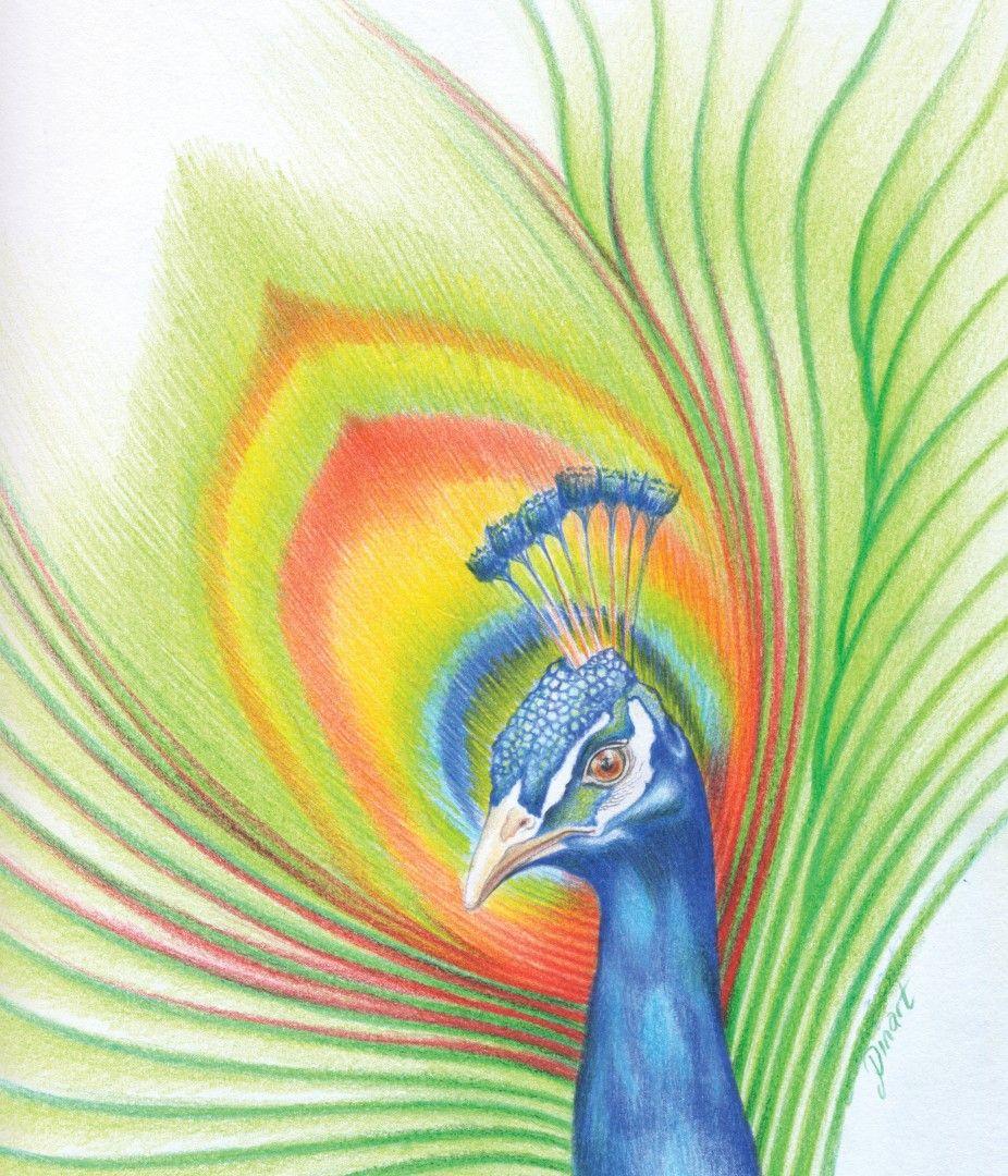 Tavus Kusu Kuru Boya Illustrasyon Tasarimi Kus Cizimi Resim Illustrasyon