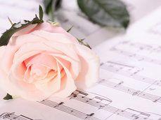 Doce melodia e linda rosa.