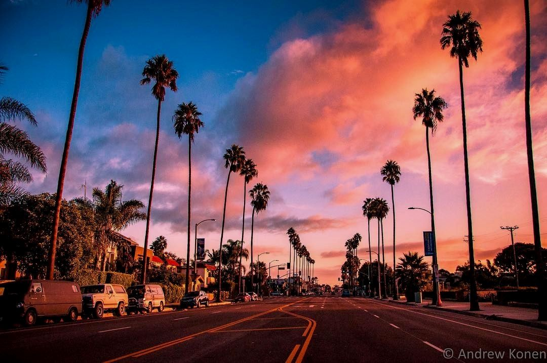 """Palm trees and cotton candy sky for daze…"" . credit"