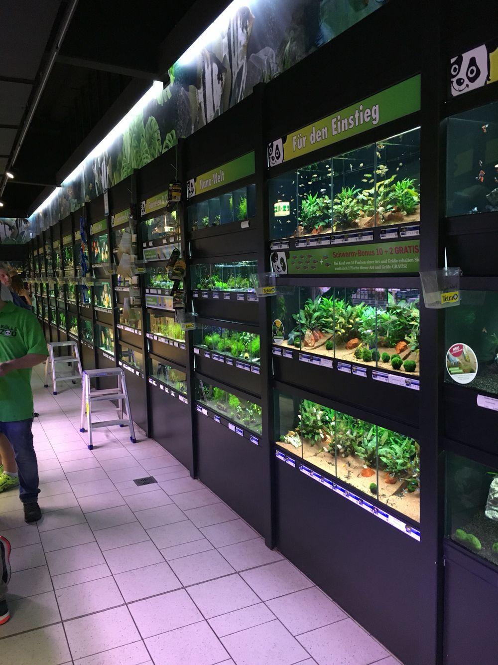 Koelle Zoo Aquarium Fish Store Aquarium Shop Aquarium Store