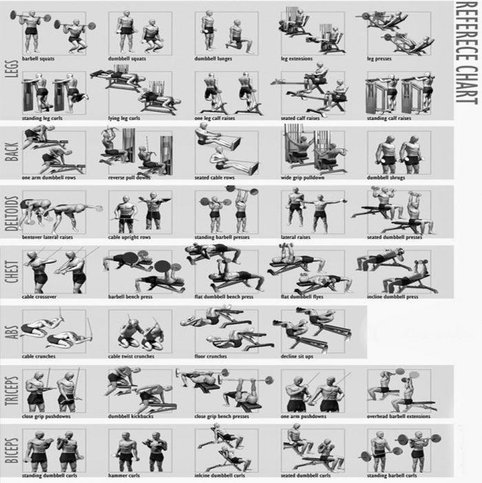 Full Body Workout Chart