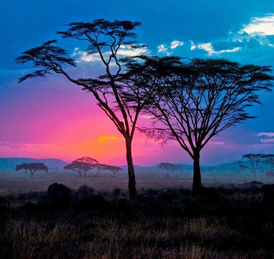 Serengeti Sunset, Africa