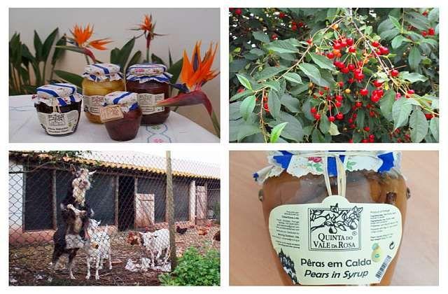Venha provar os #doces da Avó na Quinta do Vale da Rosa em #Alcobaça | #Portugal | Escapadelas ®