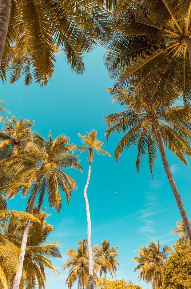 Random Inspiration 17 Palm trees wallpaper, Tree