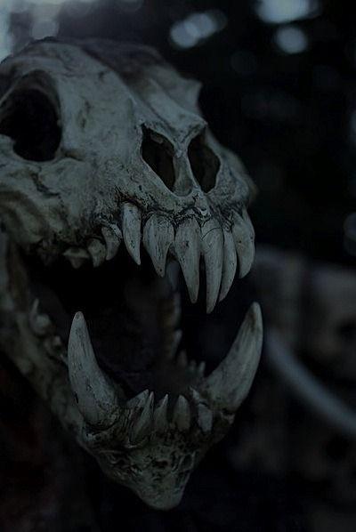 Skulls Tumblr Aesthetic: Искусство ужасов, Мрачные фотографии