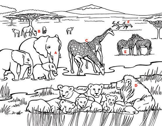 Image Result For Flag Of South Africa Coloring Page Animal Coloring Pages Jungle Coloring Pages Coloring Pictures Of Animals