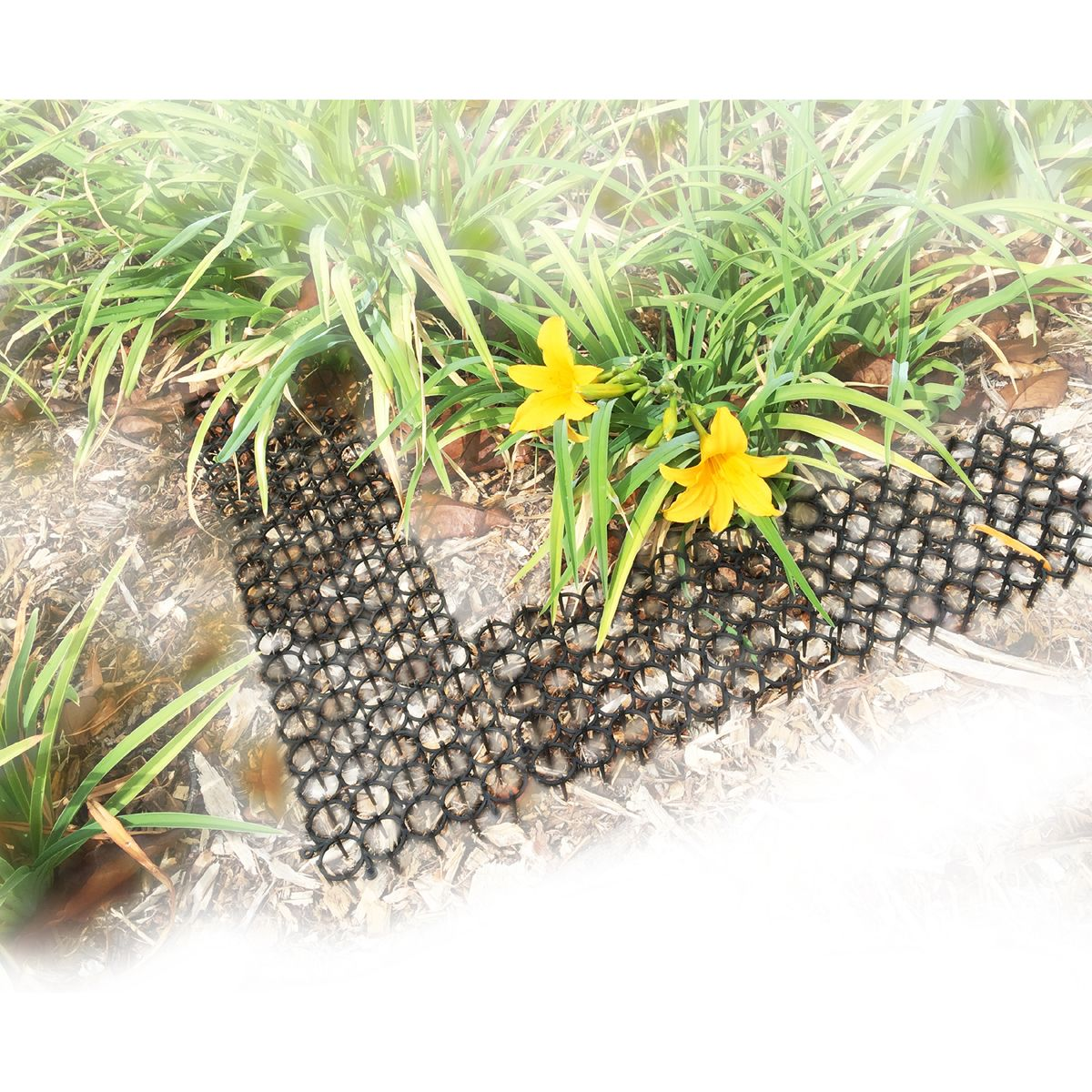 Pest Repelling Pricklers (Set of 6) Landscaping with