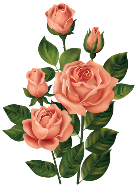 Roses Png Clipart Image Flower Art Flower Drawing Flower Clipart