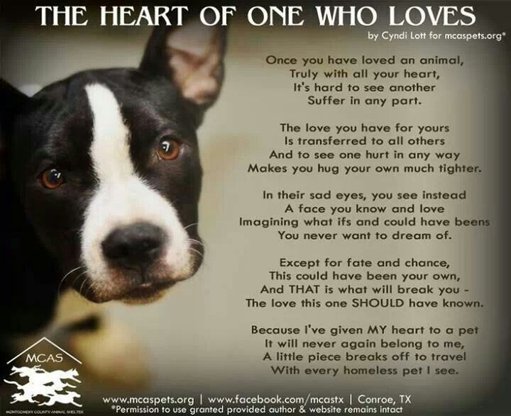The Heart Of One Who Loves Dog Quotes Dogs Animals
