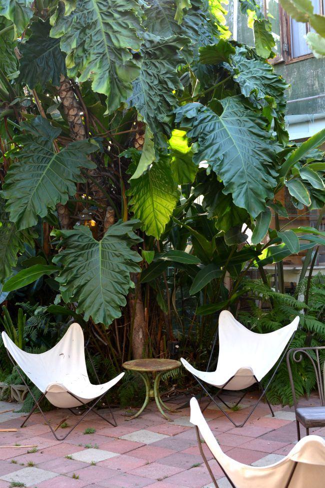 urban jungle bloggers  plants  u0026 art by  look33