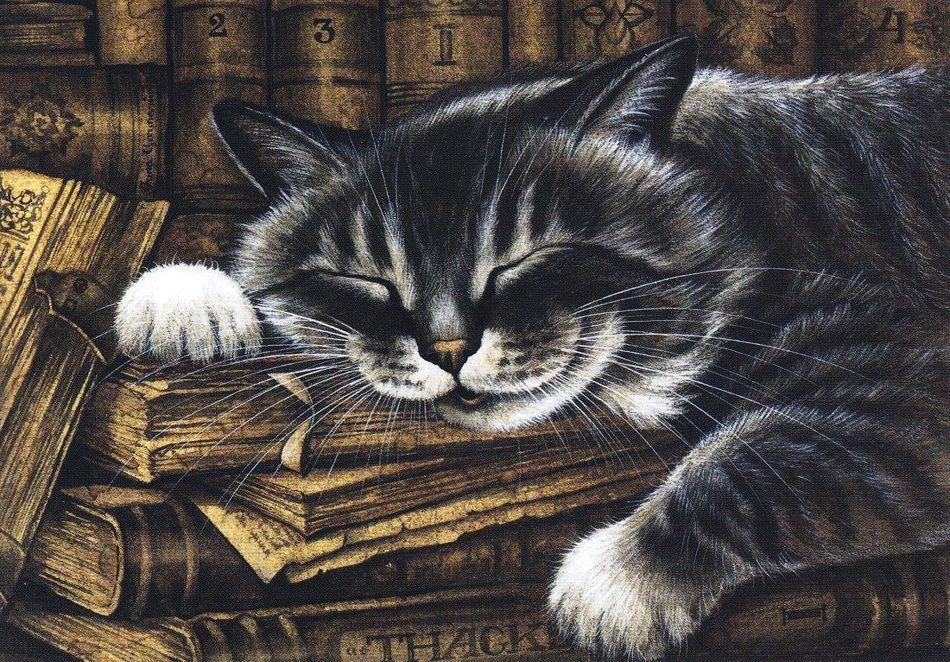 Ласковый котик картинки