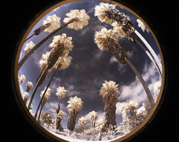 Palm Tree Globe  Mission Bay Park, San Diego, Californa  Nikon D70, converted for infrared   frm jimchenphoto.com AF-s 18-70 DX, with el cheapo 0.42 wide angle adaptor bought from eBay   @ 18mm, f 13, 1/60s.