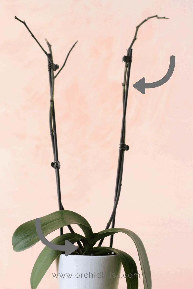 Pin On Indoor Plants