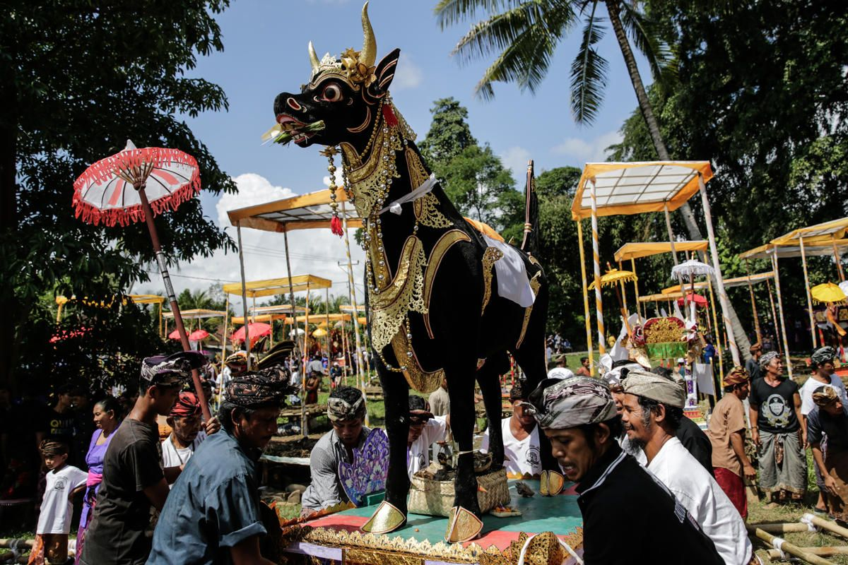 Balinese Men Carry A Sarcophagus In The Shape Of Buffalo During