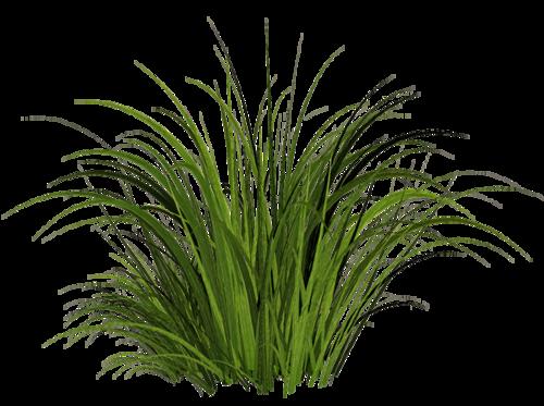 Grass Png405 Png 500 373 Grass Photoshop Photoshop Landscape Grass Textures