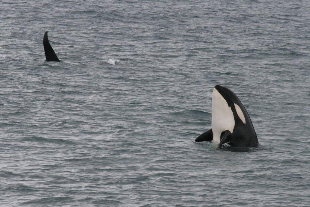 Wolves Of The Sea Iii Kenai Fjords Animals