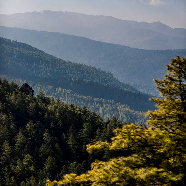 Explore The Limitless Natural Beauty Of Bhutan Through Eyes Le Meridien Thimphu