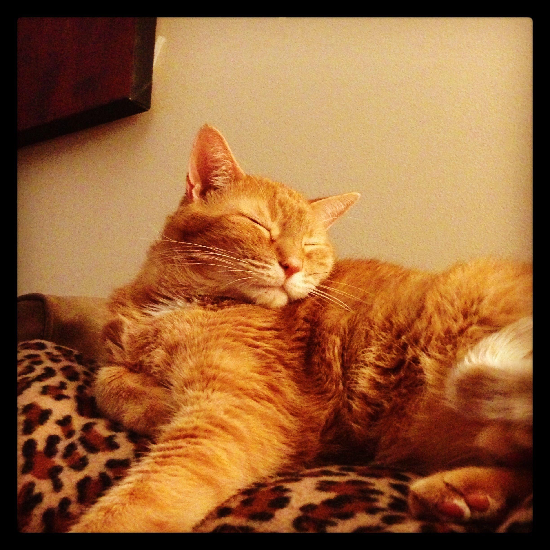 Orange tabby Orange cats, Cute animals, Orange tabby