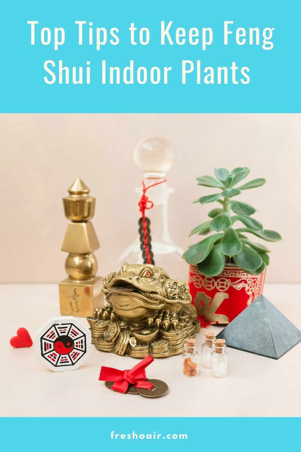 Top Tips to Place Feng Shui Plants In Your Home -   16 plants Office feng shui ideas