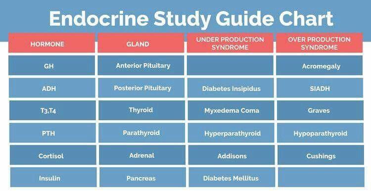endocrine study guide neurologist pinterest med school nclex rh pinterest com endocrine study guide with answers endocrine study guide quizlet