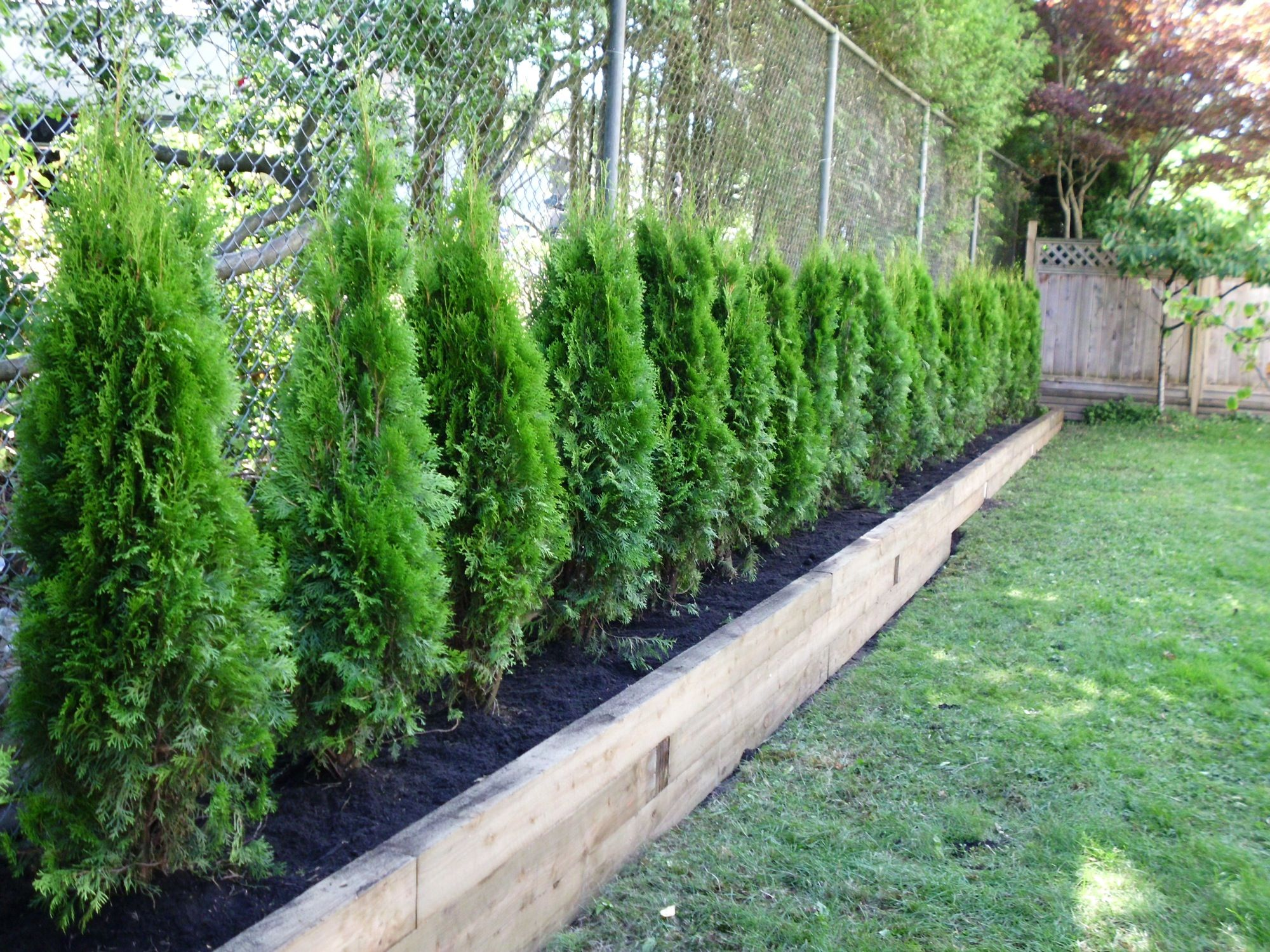 really love the raised bed idea to create a privacy fence using smaller evergreens outdoor. Black Bedroom Furniture Sets. Home Design Ideas