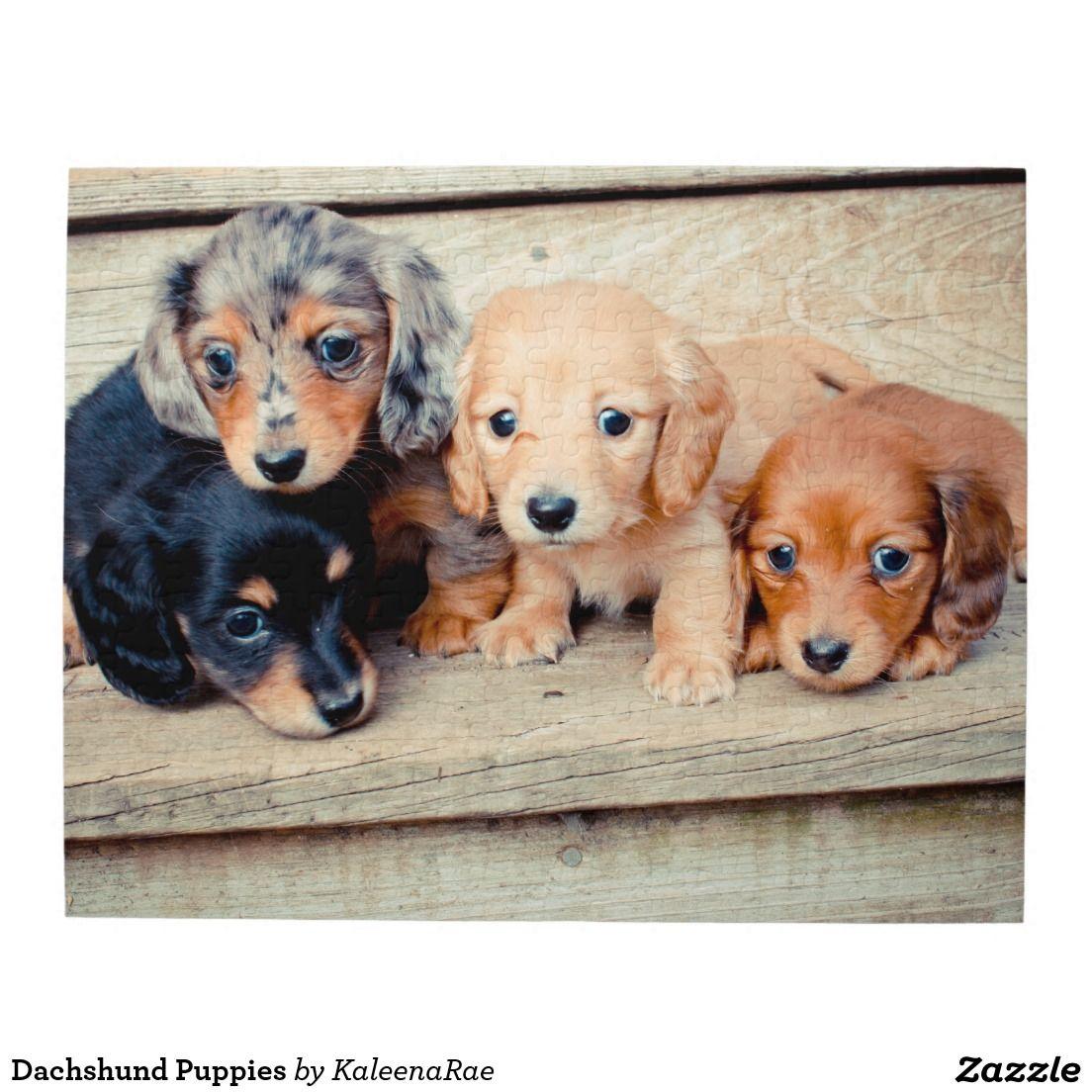 Dachshund Puppies Jigsaw Puzzle Zazzle Com Dachshund Puppies