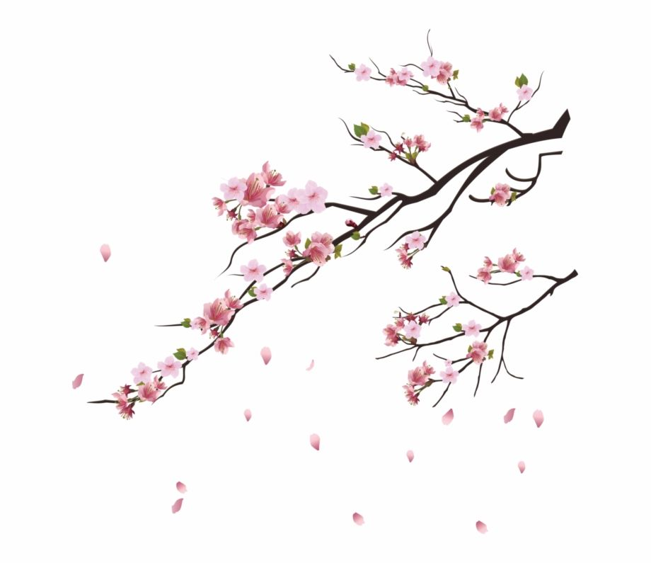 Cherry Blossom Tree Png Transparent Png Image For Free Download Explore More High Quality Free Png Image Cherry Blossom Art Blossoms Art Cherry Blossom Vector