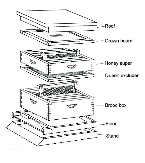 beehives: makeup of a bee's home - cox's honey starting a beehive,  langstroth hive