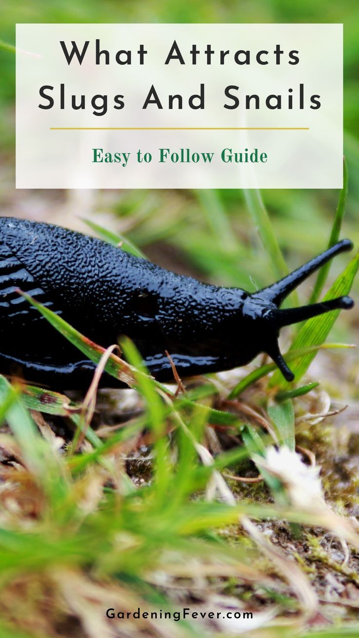 What Attracts Slugs And Snails Easy to Follow Guide