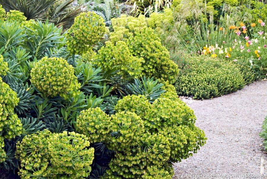 10 plantes faciles qui r sistent au manque d eau d e s i. Black Bedroom Furniture Sets. Home Design Ideas