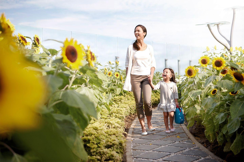 sunflower garden. changi airport   airports i 2019