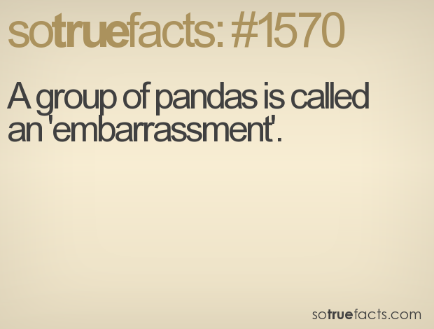 Sotruefacts Fact Number 1570 Weird Facts Wtf Fun Facts Funny Facts