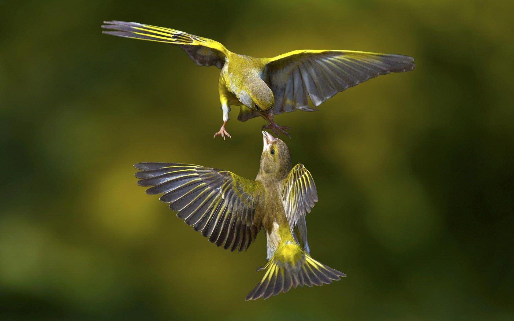 Птички в полете картинки