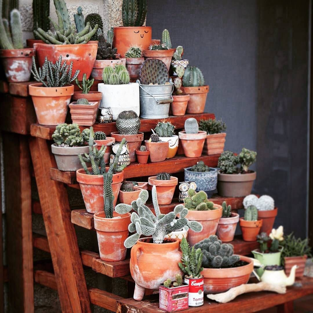Pin by pollie maggoux on greenspiration pinterest
