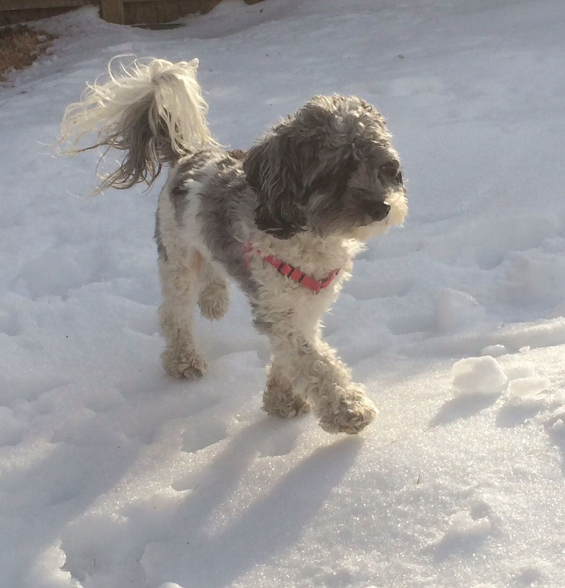Luna in NY Adoption Pending!! http//www
