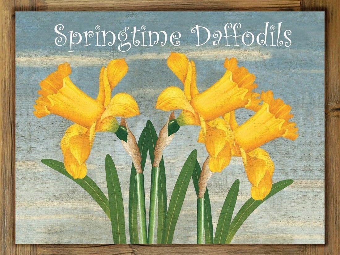 Springtime daffodils metal sign on rustic barn wood frame home and