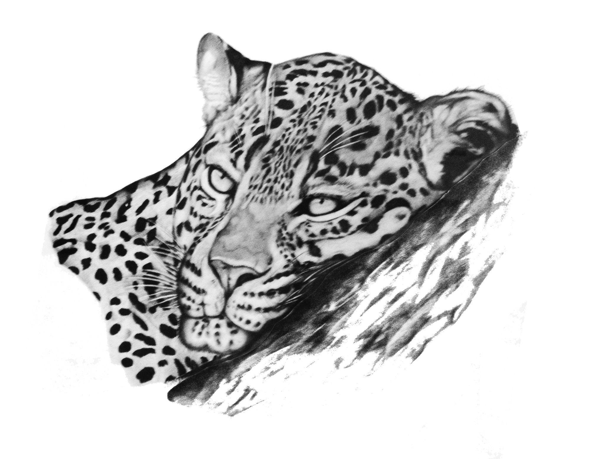 Леопард картинки карандаш