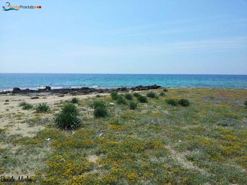 Specchiarica - Punta Prosciutto - Luoghi, attività ed eventi nel salento