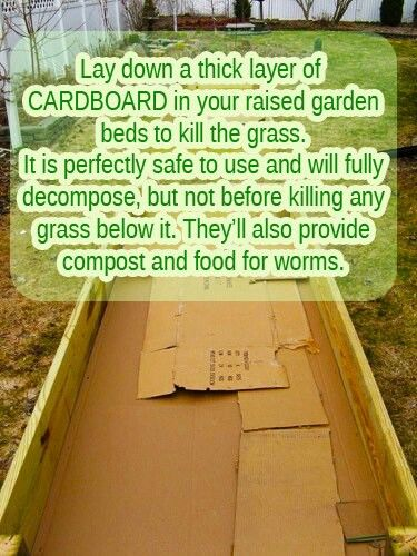 Cardboard in raised beds to kill weeds and prepare soil  Not