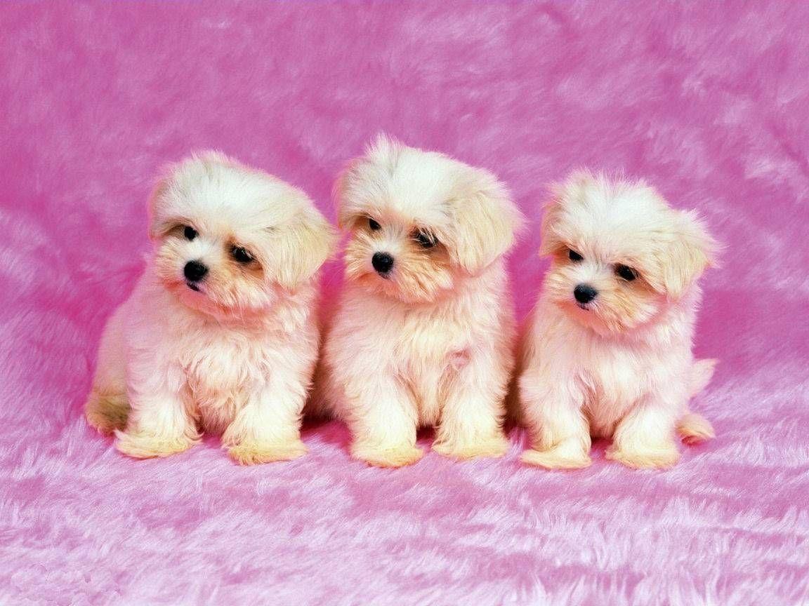 Cute Dog Desktop Wallpaper Free Cute Puppy Wallpaper Cute