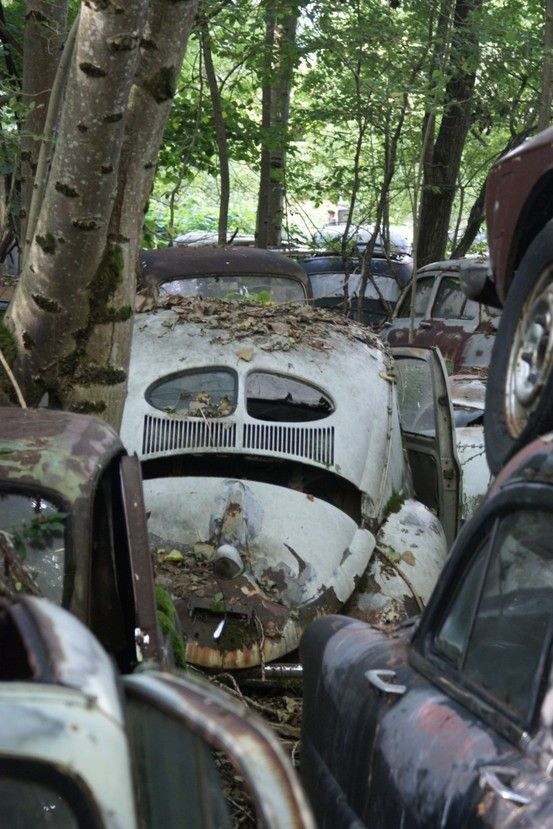 Pin by scot glasgow on barn finds pinterest vw for How to treat barn wood for bugs