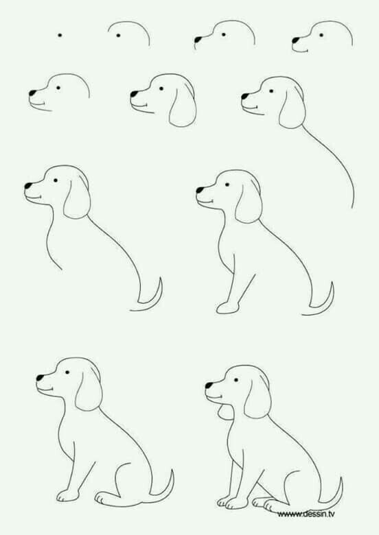 Simple Dog Drawing Step By Step