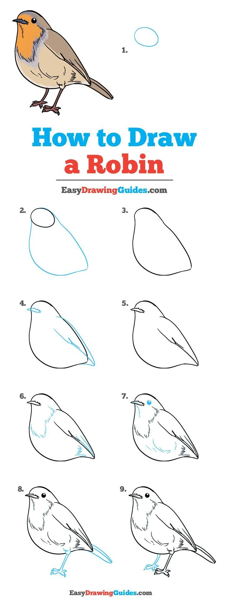 how to draw a robin really easy drawing tutorial is part of Drawings - How to Draw a Robin  Really Easy Drawing Tutorial Easyart Sketches