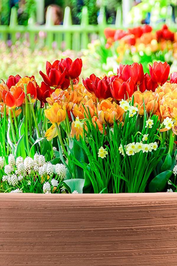 Tulpen Narzissen Hyazinthen Co Zwiebelpflanzen Sind Pflegeleicht Und Eignen Sich Auch Fur Garteneinsteiger Zur Bunte Blumenzwiebeln Bepflanzung Pflanzen
