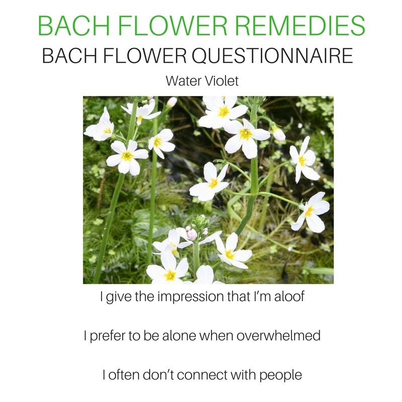 Pin By Tejal On Bach Flower Remedies Flower Remedy Bach Flower Remedies Bach Flowers
