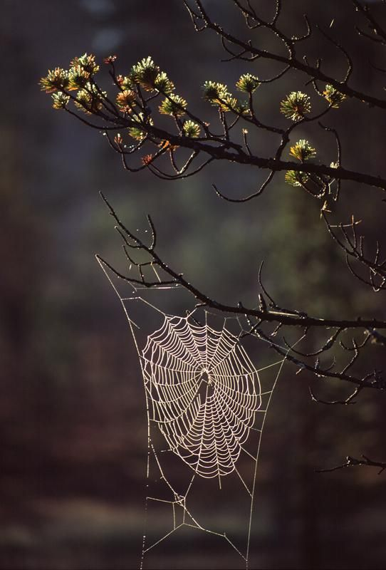 Spiderweb in the forest, Norway    Gives me arts & crafts ideas. :)
