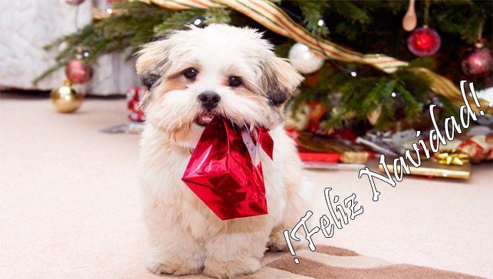 Resultado de imagen de regalos navideños pinterest